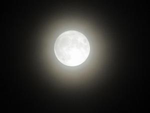 902-harvest-moon